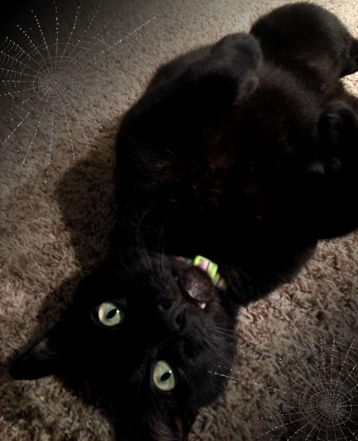 Happy Halloween!! - Larry Cat