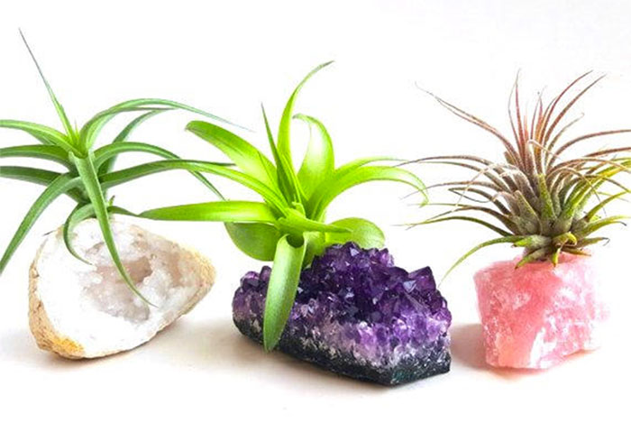 20 Unique Last Minute Mother's Day Gifts - Crystal Air Plant Set