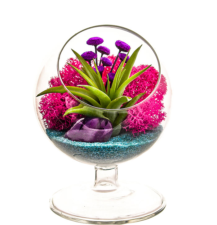 20 Unique Last Minute Mother's Day Gifts - Air Plant Terrarium